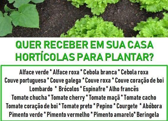 Viveiro de plantas